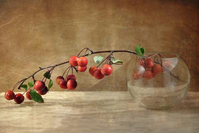 Ранетки натюрморт, яблочки, ранетки
