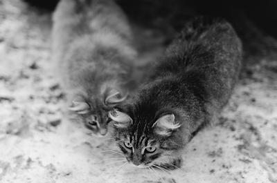 следопыты всё те же коты расследуют важное дело :)