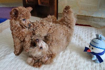 С годом желтой собаки! Год праздник Новый год собаки Люся Мэри