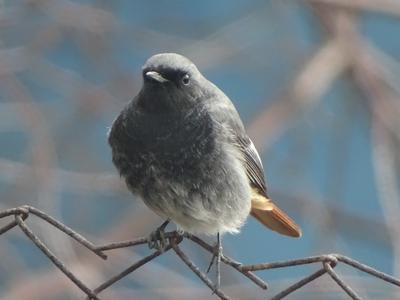 *** птица