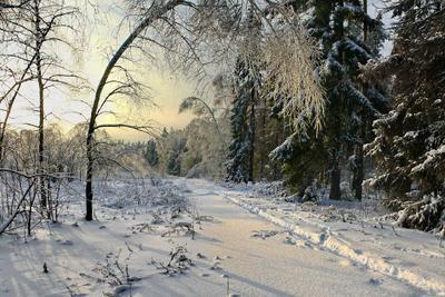 Ледяная ветка березы, вечер, дорога, закат, зима, лед, лес, пейзаж, подмосковье, снег, тропа, январь