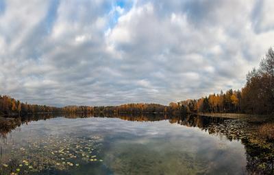 У лесного зеркала... озеро осень воронец