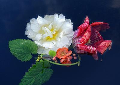 Цветы на воде.