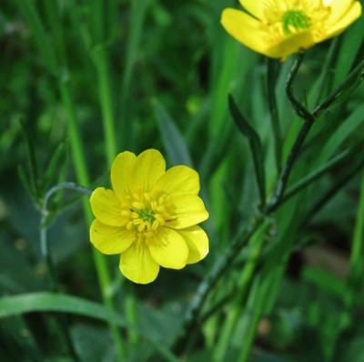 Жёлтые цветы жёлтые желтый цветок цветы растение yellow flower plant