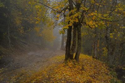 Дорога в осень горы Кавказ утро дорога туман