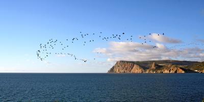 """""""Снова птицы в стаи собираются..."""" стая птицы перелет море"""