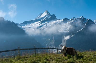In the right place at the right time Switzerland Grindelwald