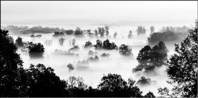 Туман крепчал ч б туман пейзаж над речкой контраст подмосковье