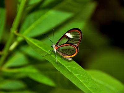 Butterfly Бабочка природа цветок
