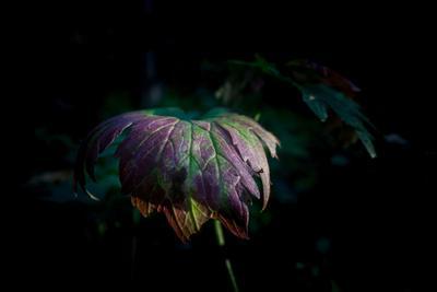Фрагмент природы листья лес природа