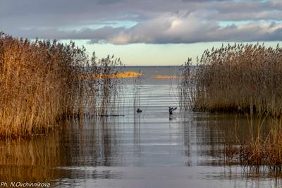 Утки в городском парке Осень утки парк Петергоф Александрия