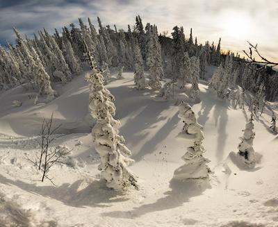 Гора Зеленая, Шерегеш  елки, зима, снег, солнце