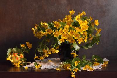 The Gold Of Caltha натюрморт букет цветы желтый