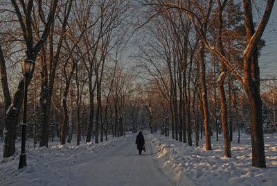 В СТАРОМ ПАРКЕ старый парк зима человек