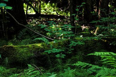 В лесу лес деревья природа лето солнце