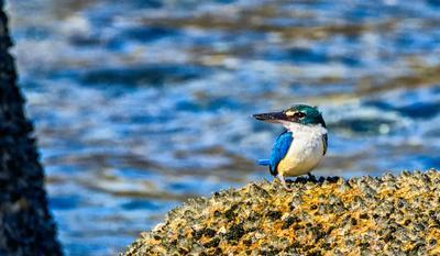 Kingfisher Птицы зимородок фотоохота