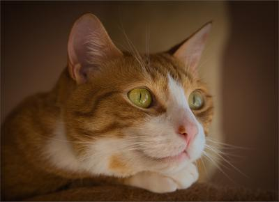Птичка в окне животные кошки фауна