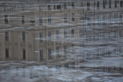 Ворона на Фонтанке Ворона птица река лед отражение