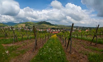 Весной в Эльзасе alsace wine route barr france винная дорога эльзаса франция эльзас