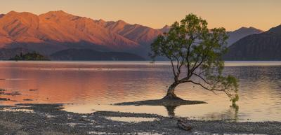 Дерево озера Ванака