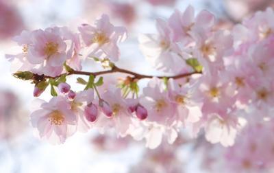 Цвет настроения розовые цветы весна радость