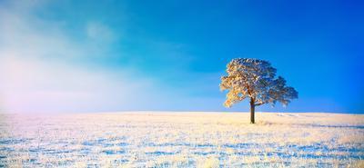Тишина Дерево Сосна Зима Голубой Белый Иней Рассвет