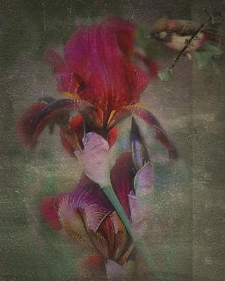 *** 虹彩や鳥 (ирис и птица) цветок,ирис,птица