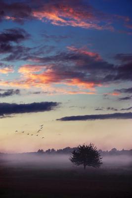 *** туман, дерево, восход, небо, тучи, закатное небо