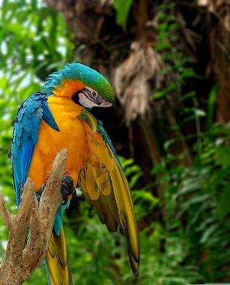 parrot индонезия, бали, попугайчик