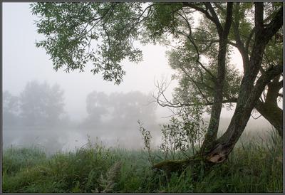 Летние туманы Дерево пруд туман