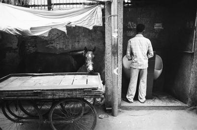 India /6/