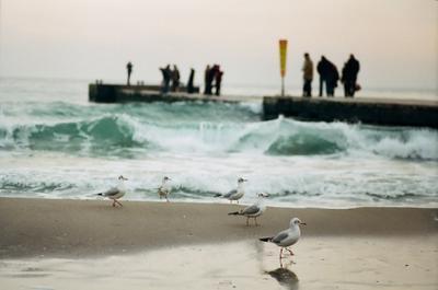 как на параде чайки, море, Одесса, волны