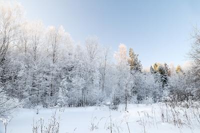 пра сказочный лес