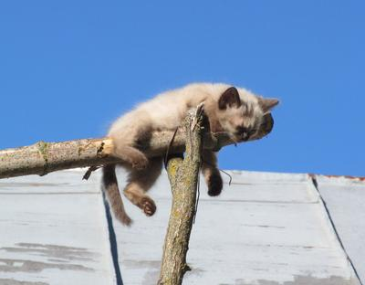 да ну ее эту вашу крышу, я тут перекемарю кошки котята животные