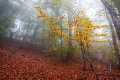 Осень на Демерджи крым осень туман демерджи