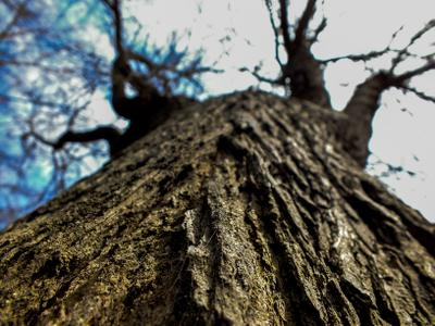 Древо вводит в небо дерево небо макро природа