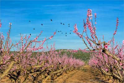 Весна пейзаж небо облака птицы сад