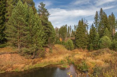 Красочное разнотравье осени Речка лес трава листья осень краски сосны облака