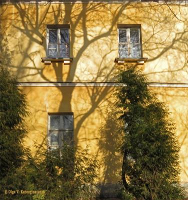Тени и отражения красивые тени деревьев на стене отражения в окнах