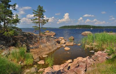Озерный край. Жаркое лето сосны скала лето озеро Сайма pine Saimaa Finland