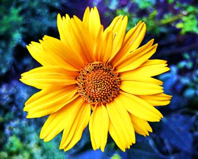 Маленькое солнце NOHOR 10 цветы