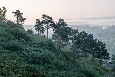 На рассвете сосны рассвет гора птица полет туман утро