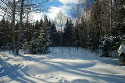 ..март.. лес небо зима снег
