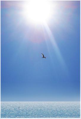 чайка чайка море солнце полёт