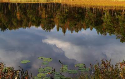Осень. Бучкино болото...