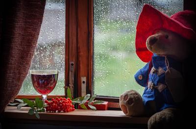 осень не за горами дождь деревня север лето в деревне осеннее настроение рябина паддингтон