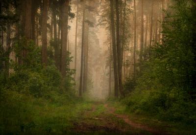*** балашиха лес туман