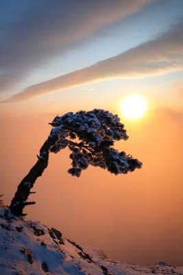 Февральским утром... крым утро восход солнце облака небо дерево пейзаж