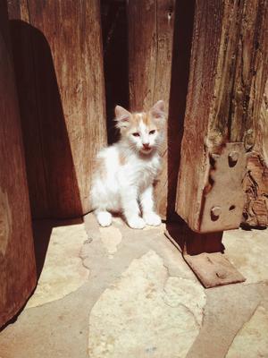 Kitten котенок кошка домашнее животное