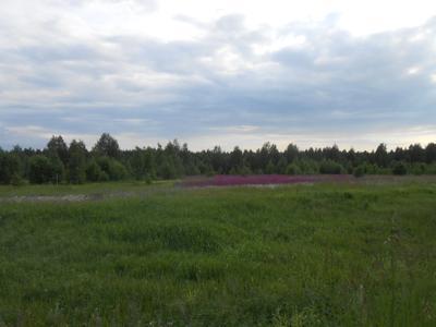 Цветущий луг луг поле лето цветы